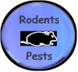 blacklights-for-rodents-and-pests